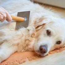 犬の毛が絡まるのはブラッシングのせいだけじゃなかった!毛玉ができる・毛が絡まるときの病的理由