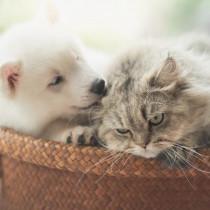 布団の選び方どうしてる?行動診療科獣医師が経験した犬猫の布団事情
