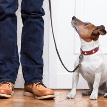 成犬のお悩み3位トイレ問題、2位無駄吠え、1位は…?よくある成犬のしつけお悩みトップ3