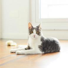 一人暮らしで猫は飼える?猫と暮らしたい方に確認してほしいお部屋作り7つのポイント