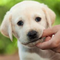 【獣医師執筆】犬の「甘噛み」叱った方がいいの?「本気噛み」との違いと正しいしつけ方