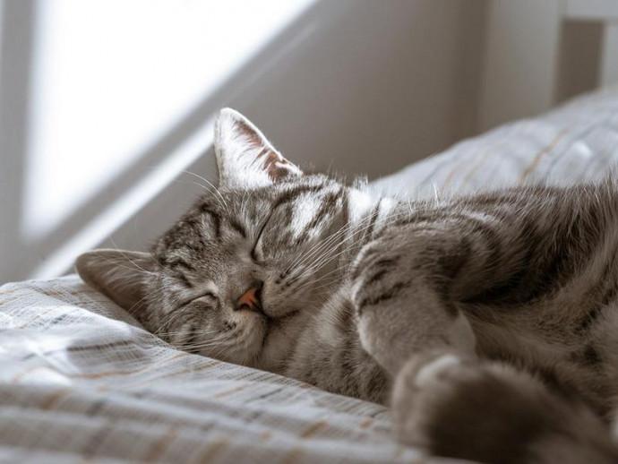 【獣医師執筆】猫の「いびき」に潜む危険!?猫がいびきをする理由と病気が潜んでいる場合のいびき
