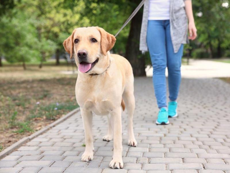 歩か 子犬 ない 散歩
