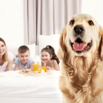 【獣医師執筆】進学や就職、結婚…家族の増減で愛犬に対して気を付けてあげたいこと