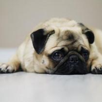 【獣医師執筆】「疲れたワン…」気付いてあげたい!犬が疲れたときに見せるサインと対処法
