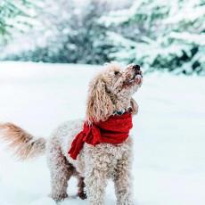 犬は寒くないの?寒い冬を快適に過ごすには