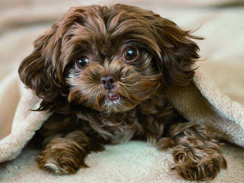 犬の視界~わんちゃんにはどんなふうに見えているの?