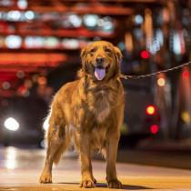 安心・安全な夜の散歩に!犬&飼い主さん必見の夜に持ちたい散歩グッズ5選