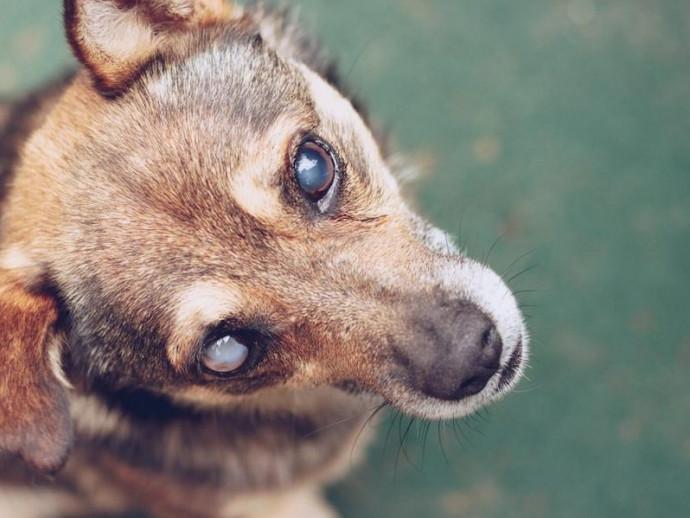 盲目の愛犬を守ろう!目が見えないわんちゃんのためのグッズ4選