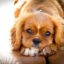 【獣医師執筆】ペットにも乳酸菌?話題の「乳酸菌」とサプリの正しい選び方