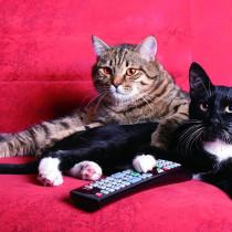 『2月22日は猫の日』猫がテレビを見る?!テレビっ子の猫が好む番組とは