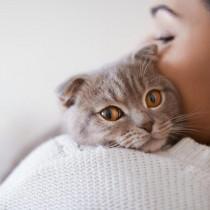 【獣医師執筆】猫が大好きなのはやっぱり飼い主さん!猫との絆をもっと深めるためにできること