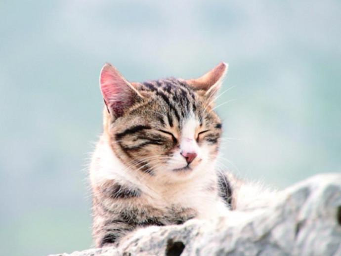 野良猫の生活~保護をしてお家に迎え入れる時に注意すること