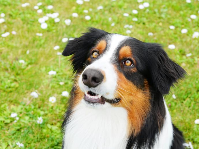 犬の目のこと!どんな色や種類があるの?