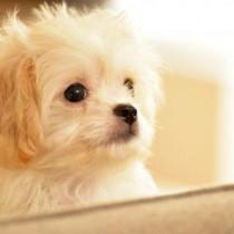 今大人気のミックス犬!種類や特徴まとめ
