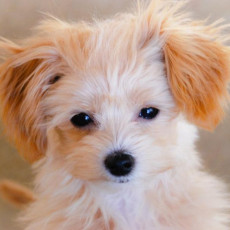 犬の年齢、人間でいうと今何歳?
