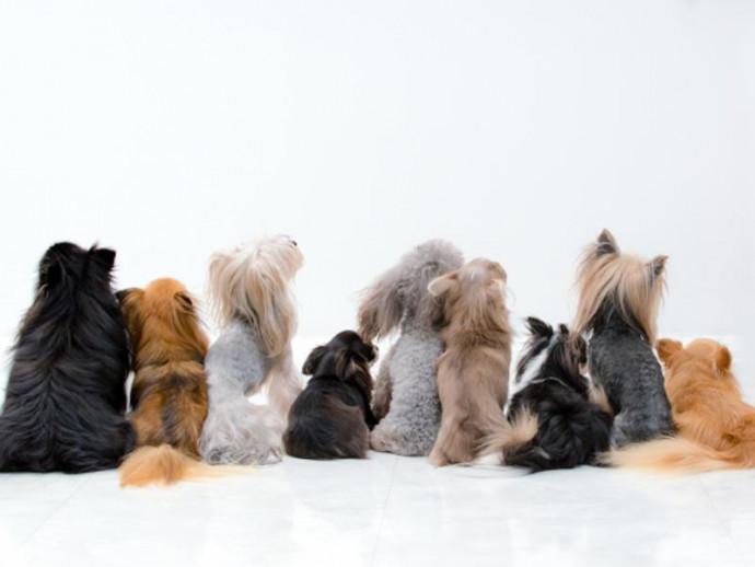 人気の犬種ランキング発表!ダントツ1位はあのわんちゃん!