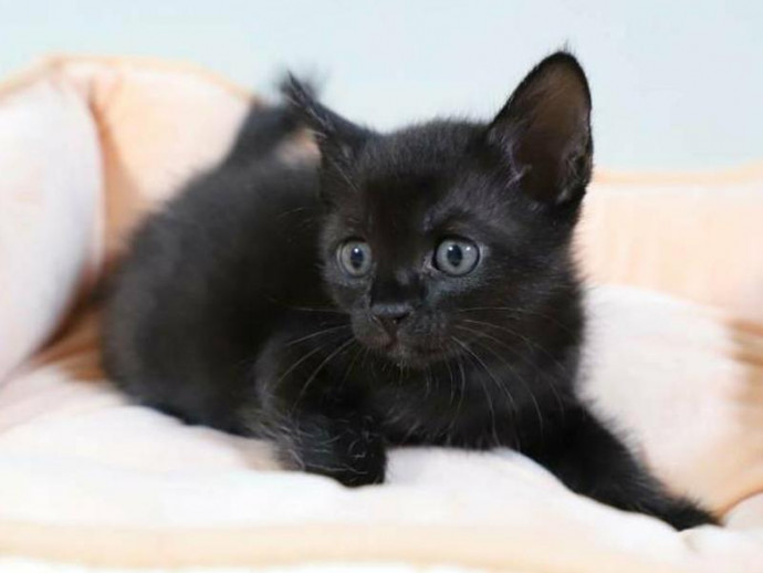 念願の猫との暮らし ~子猫との生活で注意すること~