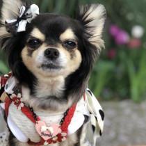 犬のお散歩が楽しい季節。お散歩大好きなわんちゃんをご紹介