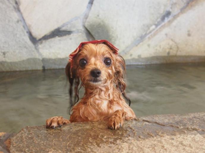 犬の被毛タイプと毛周期について正しく知ろう