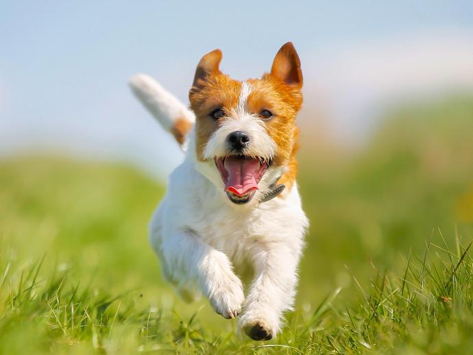 愛犬の口臭が気になる!犬の口臭の原因と対処法について