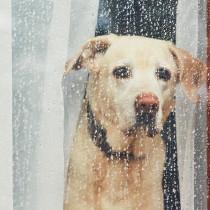 梅雨の湿度に注意!犬の体調管理に気をつけることは?
