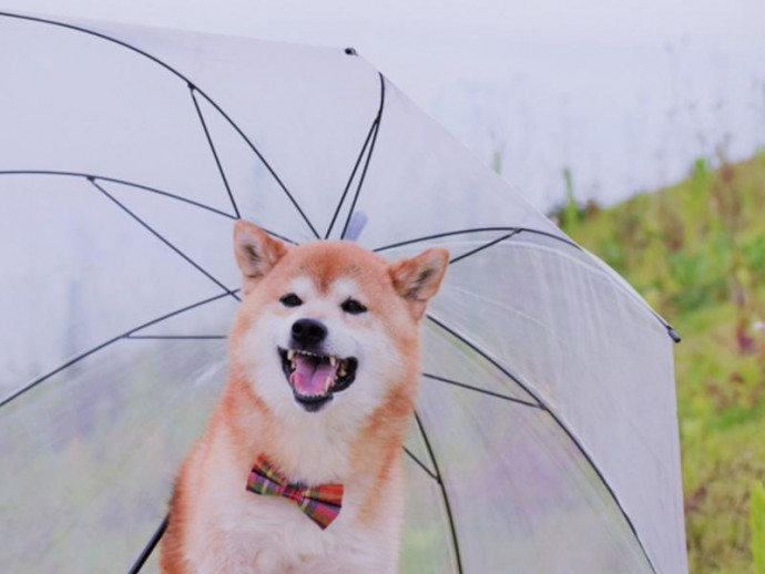 湿度が高い梅雨。犬のために気をつけることは?