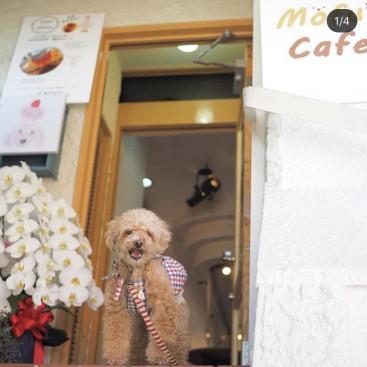 わんちゃんと一緒に美味しいコーヒーでくつろぎのひととき  大阪府高槻市に「Ⅿofu's Café モフズカフェ」第一号店オープン