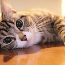 愛猫の健康管理、おうちでできるチェック方法
