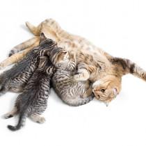 猫の発情期はどんな行動をとるの?オスとメスの違いはあるの?