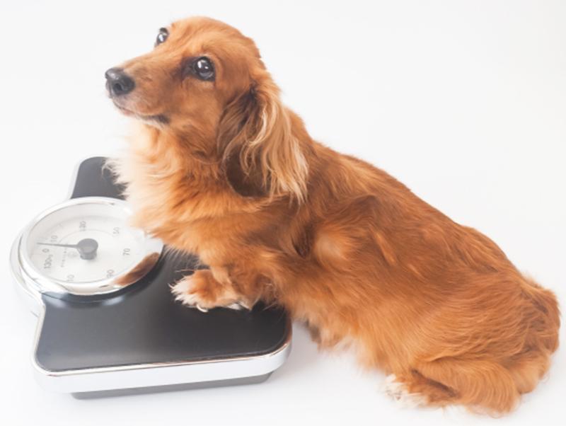 愛犬の健康寿命をのばすために気を付けること
