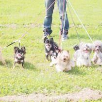 """犬の散歩は足りていますか?年齢、犬種など愛犬に合った""""散歩""""をしよう"""