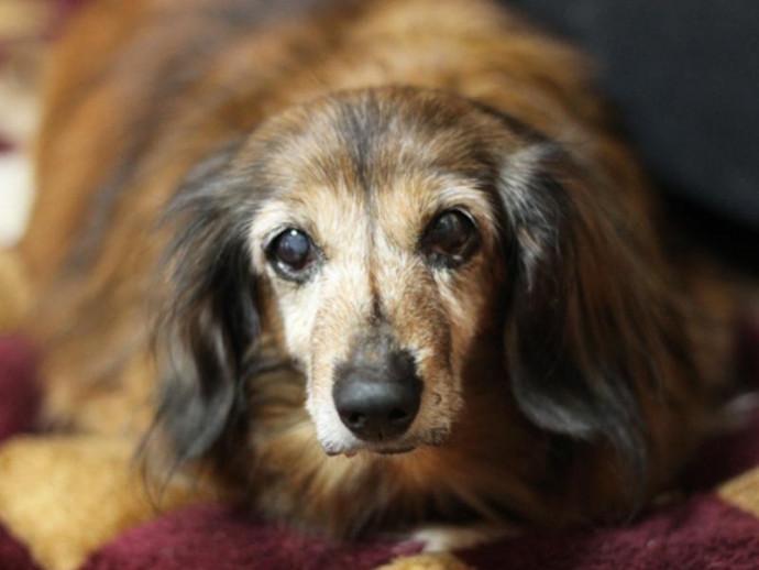シニア犬の生活、過ごしやすい環境をつくってあげよう