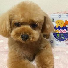 愛犬、愛猫の瞳の健康に…期間限定の特別セットをご紹介