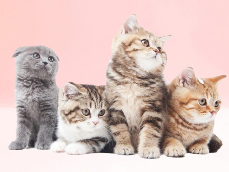 8月8日は世界猫の日!世界各地の猫の日をご紹介