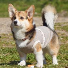 短足犬は熱中症や肥満になりやすい!?短足犬を飼う上で注意すべきこと