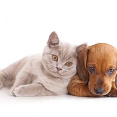 犬や猫と生活をすると飼い主の健康状態がよくなる?!