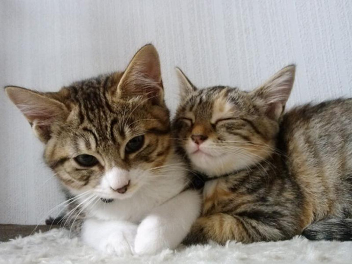 猫風邪ってどんな病気?予防対策はあるの?