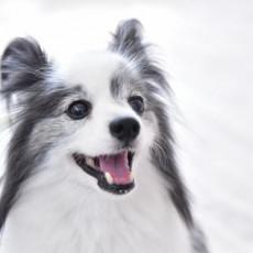念願の犬との暮らし~知っておきたい犬の基礎知識~