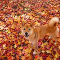 季節の変わり目。犬にも体調の変化はある?