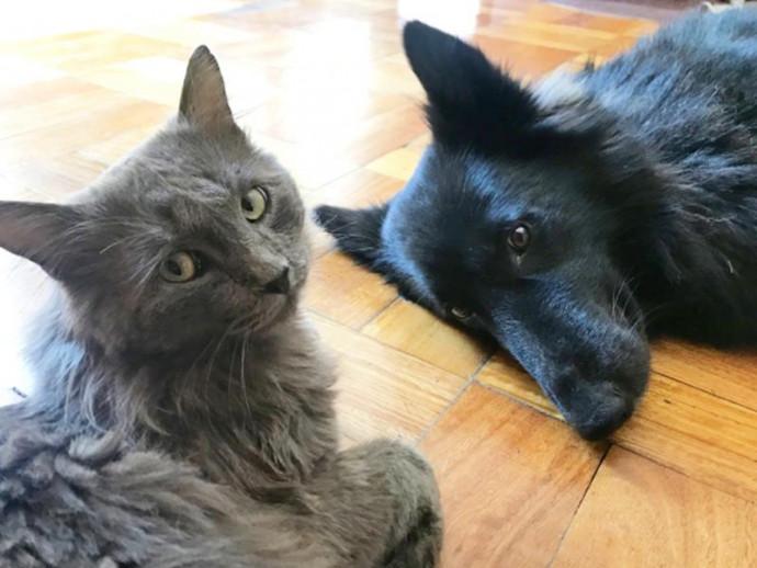 9月20日~26日は動物愛護週間!動物たちのことを考えてみよう