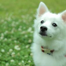 犬もまばたきをするの?まばたきにはどんなサインがあるの?