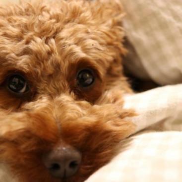 犬の寒さ対策!秋から冬にかけて気をつけること
