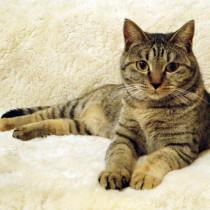 猫の分離不安はどんな症状?症状チェックと解消方法