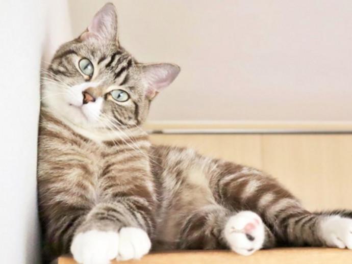 愛猫は1日どれぐらいお水を飲んでいますか?猫に必要な水分量とは?