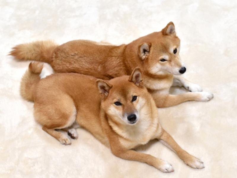 11月1日は犬の日!愛犬喜ぶ「わんわん特集」のご紹介♪