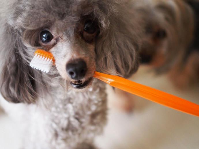 11月8日は「いい歯の日」!愛犬の歯磨きできていますか?