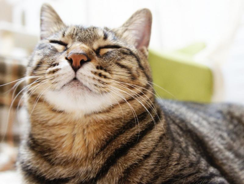 キジトラってどんな猫?特徴や性格をご紹介