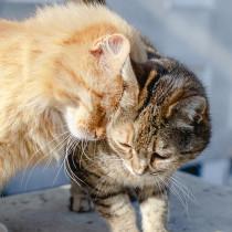 猫がスリスリしてくるのはなぜ?飼い主へのスリスリの理由とは