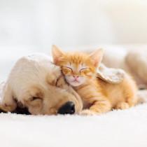 【獣医師執筆】病気を早期に発見するために、飼い主さんが気を付けるべきこと